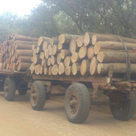 Secuestran madera que era transportada de manera ilegal