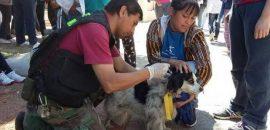 Capital: el Móvil Quirúrgico de mascotas estará desde mañana y hasta el viernes en barrio 25 de mayo