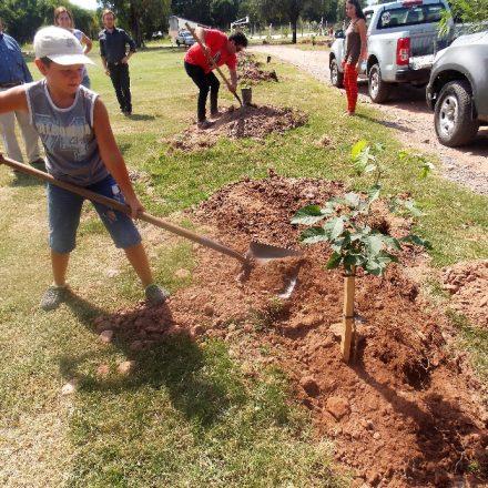 Reforestación en Coronel Moldes con árboles autóctonos