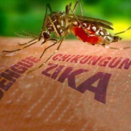 Epidemiología confirmó un caso de zika en Embarcación
