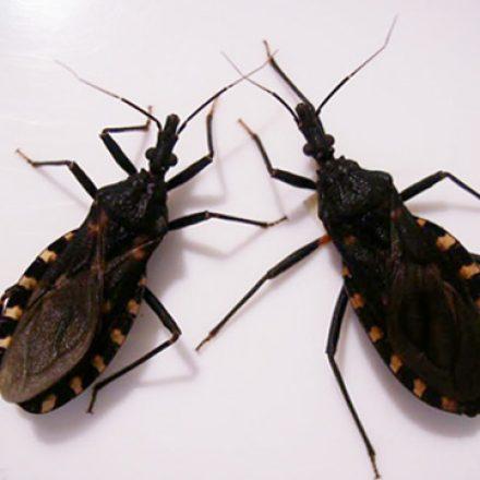 Vigilancia epidemiológica y prevención de la enfermedad de Chagas en El Quebrachal