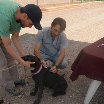 Tu Casa Tu Perro: vacunación antirrábica en el CIC de Atocha