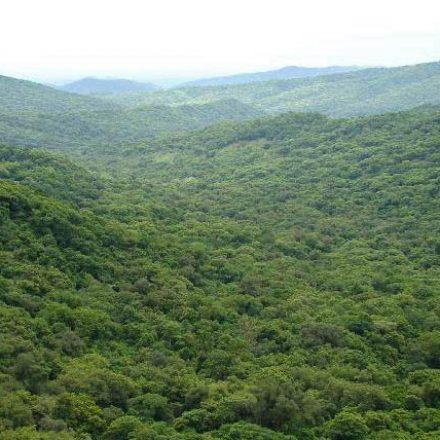 Últimos días para la presentación de proyectos de Manejo y Conservación de Bosques