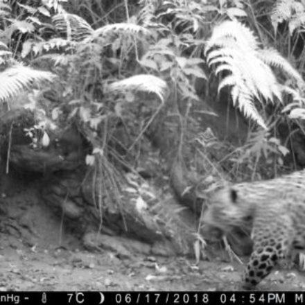La Provincia diseña estrategias para proteger de la caza furtiva al yaguareté