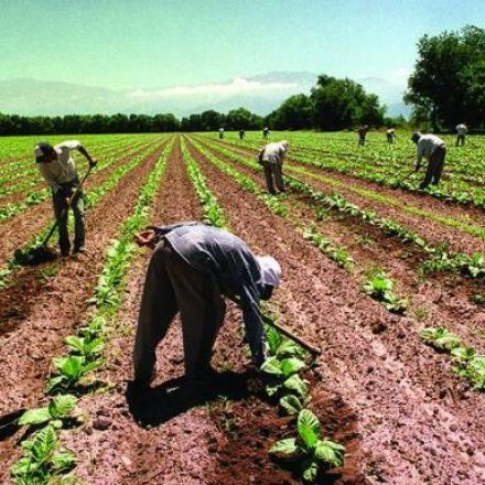 Hasta el 15 de marzo: Empadronamiento de postulantes al Programa Intercosecha Tabaco Rural