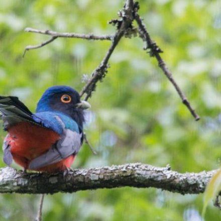 Impulsan el turismo de avistamiento de aves