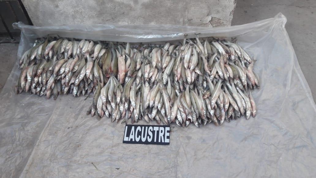 Secuestran cientos de pejerreyes producto de la pesca furtiva en el dique Cabra Corral