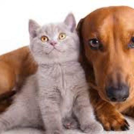 Que debemos saber antes de castrar a nuestra mascota?