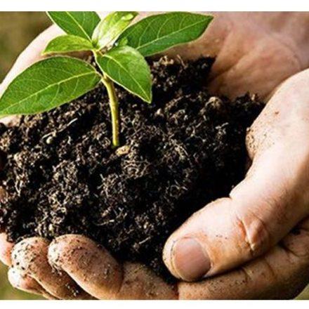 Cómo hacer abono orgánico con Yerba Mate