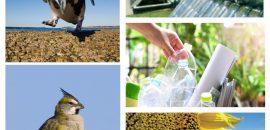 Se extiende el plazo de la convocatoria del Fondo para la Conservación Ambiental