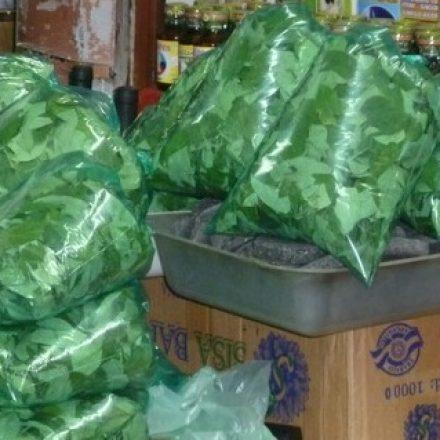 Descartan que circule en Argentina el arenavirus que causó alarma en Bolivia