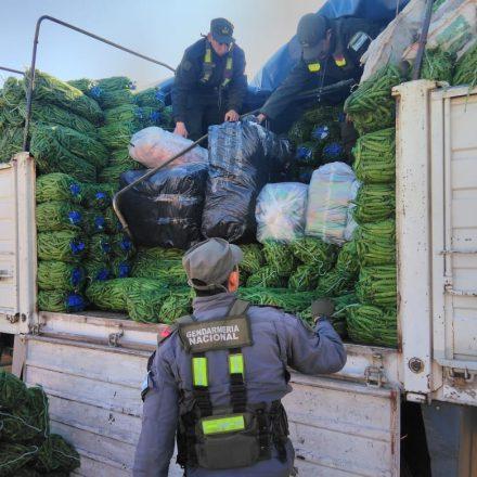 Secuestran hojas de coca y mercadería de contrabando transportadas ocultas en una carga de chauchas