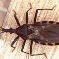 Salud Pública continúa con la vigilancia epidemiológica para Chagas