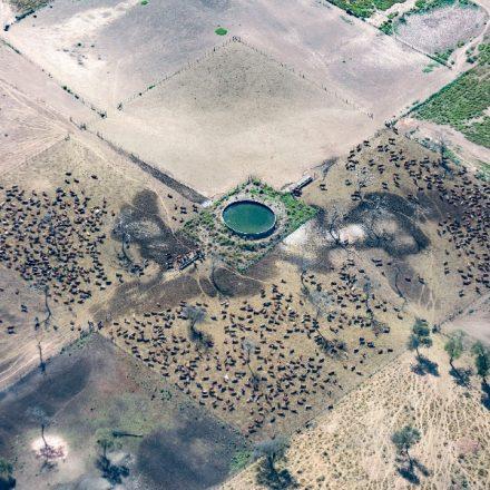 Greenpeace documentó topadoras arrasando territorios del yaguareté en Salta