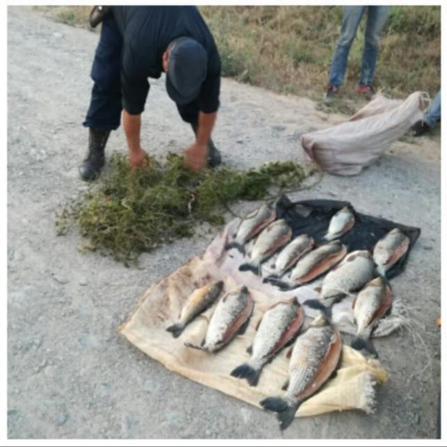Incautan sábalos producto de la pesca furtiva