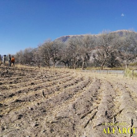Programa Semillero del Futuro 2019: Proyecto Impacto Verde en la Pre Puna