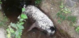 Matanza de animales: no hay carbofurán en las muestras de agua analizadas
