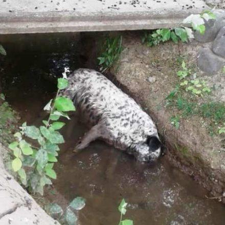 Perros envenenados: piden informes a Salud para saber si hay personas afectadas