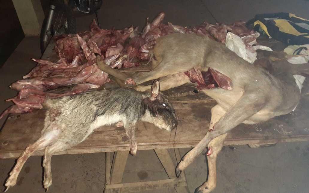 Casa furtiva: los multan por llevar viscachas y una corzuela sin vida