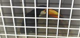 La Policía Rural y Ambiental rescató un ave de la especie Tucán