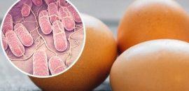 Desde febrero no se registran casos de salmonelosis