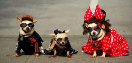 Cómo lookear a tu mascota para festejar carnaval juntos