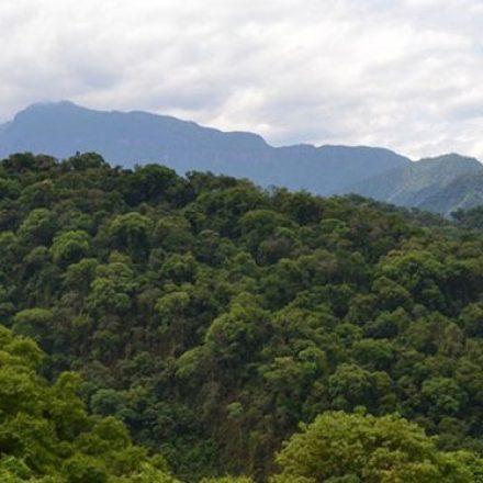 Últimos días para presentar proyectos de Manejo y Conservación de Bosques Nativos
