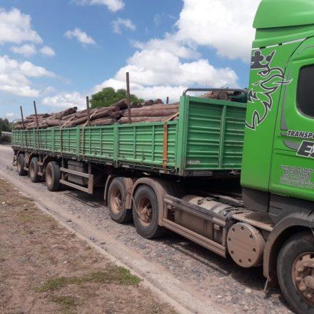 Lo infraccionan por transportar más de 500 postes de quebrachos