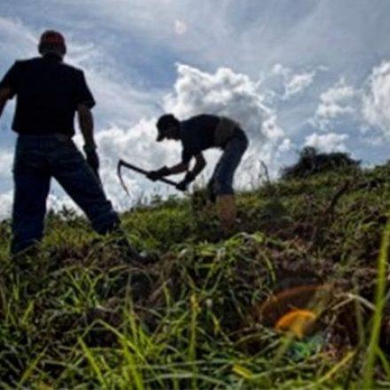 Garantizan la continuidad de la cadena productiva y abastecimiento de alimentos