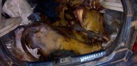 Detenidos por posible robo y faena de ganado, esta vez en Pichanal