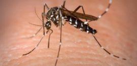 Recomiendan a la población extremar medidas de prevención contra el dengue