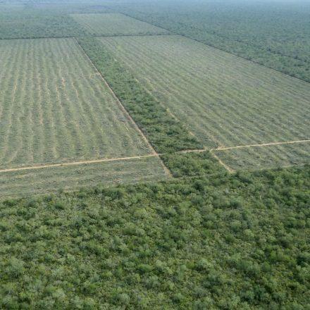 Greenpeace elaboró un listado de más de 300 compañías y grandes empresarios que deforestaron en el país durante los últimos 30 años
