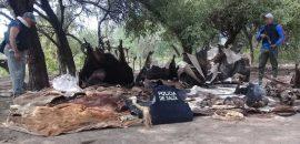Intensifican la lucha contra el robo y posterior faenamiento de ganado en el norte provincial