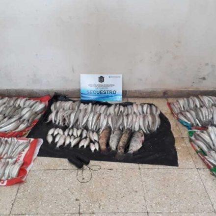 Continúa la pesca furtiva, esta vez incautan más de 600 pescados
