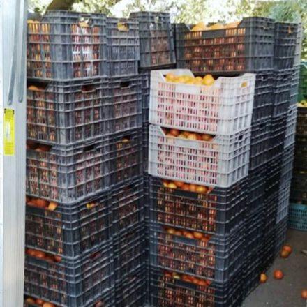 Inspectores decomisaron más de 1.600 kilos de cítricos en el puesto El Naranjo