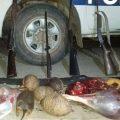 Anta: incautan quirquinchos y mulitas producto de la caza ilegal
