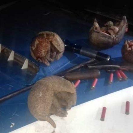 Continúa el control sobre la caza indiscriminada de quirquinchos