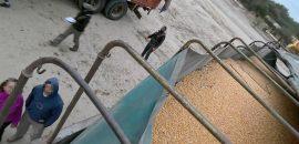 Gendarmería decomisa soja y maíz que eran transportados sin documentación