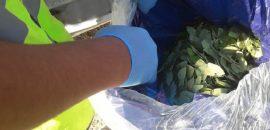 En un control vehicular detectan un cargamento de hojas de coca