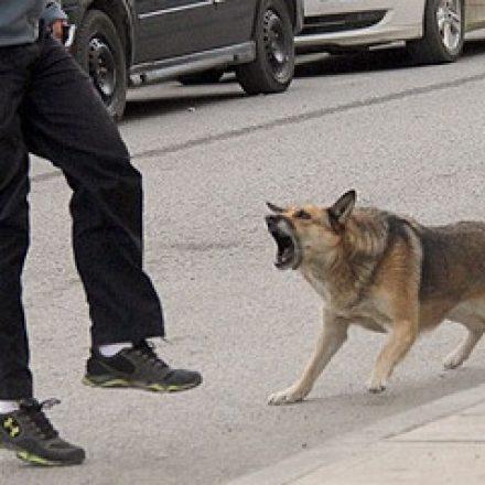Imputan por homicidio a la dueña de un perro que mordió a una mujer