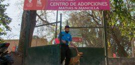 Capital: convocan a mascoteros para el programa de Voluntariado en el Centro de Adopción de Mascotas