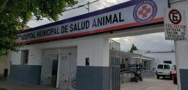 Capital: los veterinarios del Hospital de Salud Animal realizaron una cirugía de alta complejidad