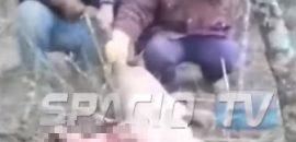 Detenidos e imputados por maltrato animal tras haber matado a un puma