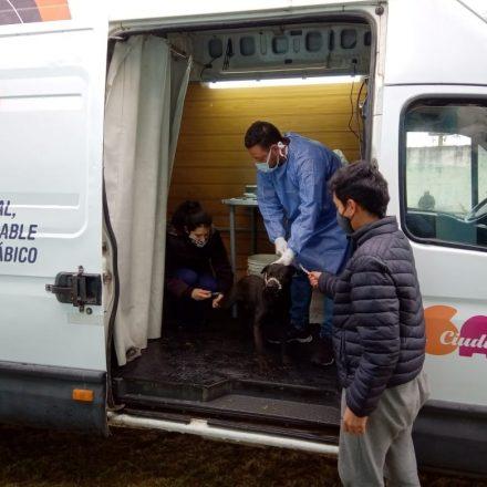 Desde el lunes continúa la castración de mascotas en Capital