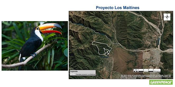 Denuncian que en San Lorenzo buscan habilitar la construcción de un country sobre una selva protegida