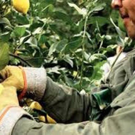 Programa Intercosecha sector Citrus: se realizará el empadronamiento hasta el 28 de septiembre